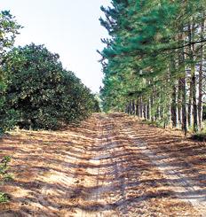 La invasión forestal