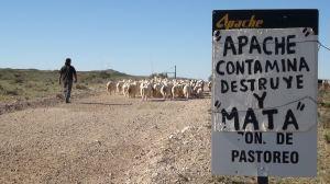 apache en territorio mapuche